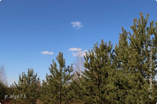 ЗДРАВСТВУЙТЕ!!!! Очень рада всех видеть!!!  Весна пришла,погода ооочень переменчивая,но на природу это не влияет - она всегда прекрасна:и в пасмурные дни,и солнечные! Каждый день любуюсь природой и хочу поделиться с вами её красотой. фото 4