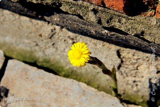 ЗДРАВСТВУЙТЕ!!!! Очень рада всех видеть!!!  Весна пришла,погода ооочень переменчивая,но на природу это не влияет - она всегда прекрасна:и в пасмурные дни,и солнечные! Каждый день любуюсь природой и хочу поделиться с вами её красотой. фото 27