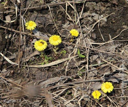ЗДРАВСТВУЙТЕ!!!! Очень рада всех видеть!!!  Весна пришла,погода ооочень переменчивая,но на природу это не влияет - она всегда прекрасна:и в пасмурные дни,и солнечные! Каждый день любуюсь природой и хочу поделиться с вами её красотой. фото 25