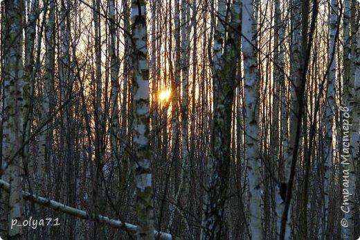 ЗДРАВСТВУЙТЕ!!!! Очень рада всех видеть!!!  Весна пришла,погода ооочень переменчивая,но на природу это не влияет - она всегда прекрасна:и в пасмурные дни,и солнечные! Каждый день любуюсь природой и хочу поделиться с вами её красотой. фото 29