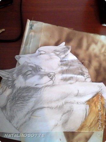 Волки фото 4