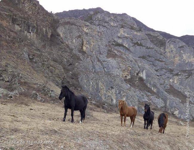 Пару недель назад мы снова решили съездить за Чемал. Катунская долина - живая иллюстрация алтайских легенд, ведь если внимательно всматриваться в горы, можно найти множество лиц. По легенде после потопа земля не смогла выдержать тяжести алтайских богатырей и они превратились в горы.   фото 22