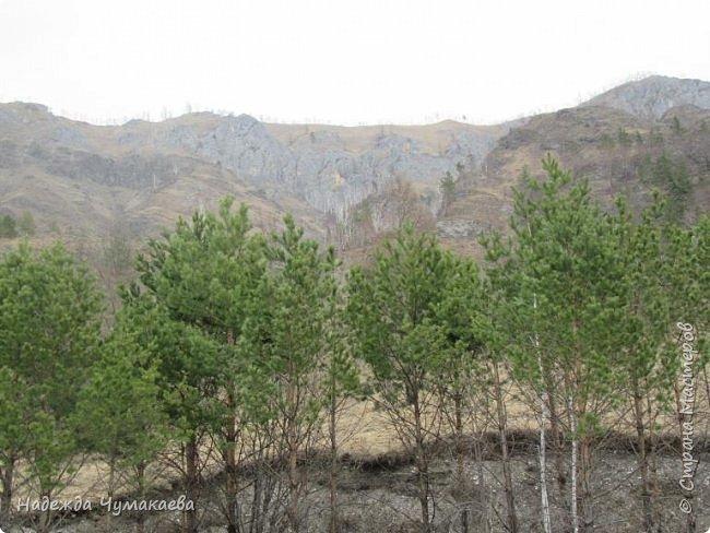 Пару недель назад мы снова решили съездить за Чемал. Катунская долина - живая иллюстрация алтайских легенд, ведь если внимательно всматриваться в горы, можно найти множество лиц. По легенде после потопа земля не смогла выдержать тяжести алтайских богатырей и они превратились в горы.   фото 23