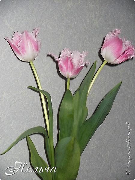 """Моя вторая работа, которая была сделана для участия в конкурсе техники пейп-арт """"Весенняя рапсодия"""".  Панно """"Запах весны"""", хотя изначальное название - """"8 марта!""""  Размер 34 х 23 см. Картина такая весенняя-весенняя!!!   Тюльпан! Тюльпан! – какая прелесть!  Какая нежность, стиль в цветке.  Таит в себе он тайну, свежесть.  Тюльпан! - даёт салют весне! (Юрий Касаткин) http://www.stihi.ru/2007/03/27-1014 фото 7"""
