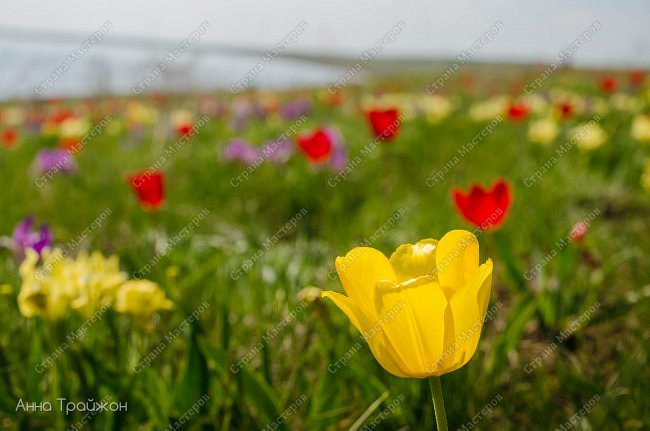 Нам повезло побывать именно в светлый праздник Пасхи в таком прекрасном месте, как Заповедник Ростовский.  фото 5