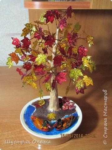 Осенний клен. фото 1