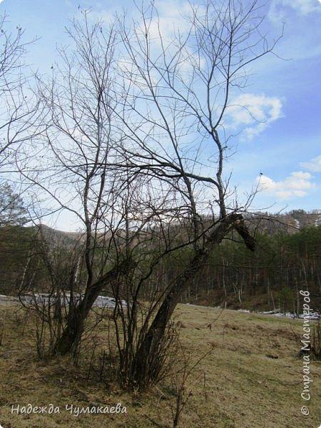 12 апреля устроили пикник на берегу реки Куюм.  КуЮм. фото 14