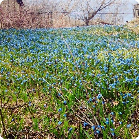"""Весна - то самое время, когда мы снимаем тёплые вещи, убираем их подальше и достаём лёгкие платья, ветровки, кофты... Весна - то самое время, когда природа просыпается, всё цветёт и радует глаз. Весна - то самое время, когда хочется перемен, пусть и не очень больших. А как же весна проходит у кукол? Мы начинаем им вязать или шить лёгкие наряды, чаще выходить с ними на улицу... Вдохновившись этой чудесной порой я решила сделать конкурс """"Весенний переполох"""" ------------------------------------------------------------------------------- Задание: Создать весенний образ. Он может быть ярким, романтичным, солнечным, да каким угодно! Приветствуется аккуратность, фото на улице(По возможности) и их хорошее качество.  -------------------------------------------------------------------------------- Правила: 1. Подать заявку на участие в комментарии 2. Дать ссылку на готовую работу в комментарии или предупредить меня, что работа готова 3. В работе указать ссылку на конкурс 4. Работа не принимается, если она была показана ранее 5. Обязательное фото этапа работы! Так как уже многие начали делать работы или уже сделали, то можно вместо него выложить фото материалов 6. Не просить за себя голосовать 7. Не ругаться и не создавать конфликты При несоблюдении правил работа не принимается или дисквалифицируется! ------------------------------------------------------------------------------------- Сроки: (Были продлены по непредвиденным обстоятельствам) Запись участников с 19.04 до 11.05(Включительно) Приём работ с 20.04 до 12.05(Включительно до 23 часов по МСК) Голосование с 13.05 до 14.05(Включительно до 23 часов по МСК) Итоги 15.05-16.05  фото 1"""