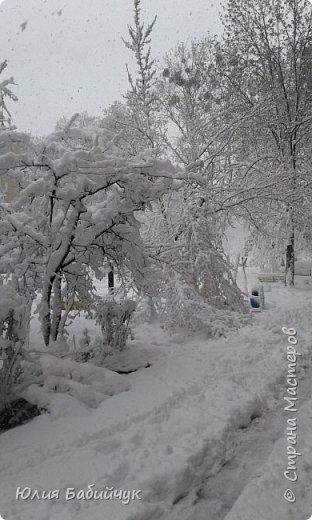 Красота возле подъезда.  фото 9