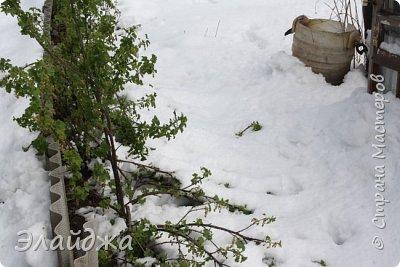 Добрый День стана! 3 день у нас идет снегопад, ревет ветер и заносит все вокруг!! А деревья все то в цвету!  В школах объявили каникулы до понедельника.  Много  городков области осталось без света, у нас не было  тоже ни света на интернета, хорошо что к вечеру починили, много в городе упало деревьев,не выдержав веса снега , поломало столбы, порвало провода,  на крыши машин и домов падали деревья. Вот вам пишу а буря продолжается, уже 40 см снега выпало,  На фото цветущие деревья покрываются снегом...Жаль что не будет в этом году ни ягод ни фруктов... по прогнозам   до конца недели нелетная погода, снег и ветер с морозом.....Вот кто думал что после 20 градусов тепла на Пасху , на следующий день начнется   такое????? фото 11