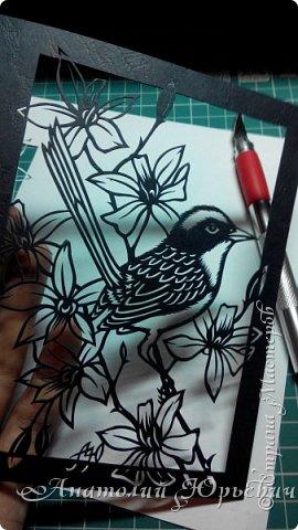 """Всем добрый день! Вашему вниманию новая открытка.  - Разноцветный расписной малюр (лат. Malurus lamberti) — птица семейства малюровых, отряд- воробьинообразные, обитающая на большей части Австралии.  - Эскиз выполнен по цветному рисунку австралийской художницы Deidre Hunt. Изменён и доработан под """"вырезалку"""". Размер - как обычно 12х16см:)) фото 2"""