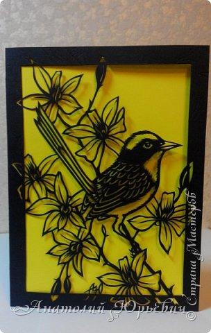 """Всем добрый день! Вашему вниманию новая открытка.  - Разноцветный расписной малюр (лат. Malurus lamberti) — птица семейства малюровых, отряд- воробьинообразные, обитающая на большей части Австралии.  - Эскиз выполнен по цветному рисунку австралийской художницы Deidre Hunt. Изменён и доработан под """"вырезалку"""". Размер - как обычно 12х16см:)) фото 1"""