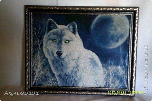 Белый волк в пару к черному, край луны и глаза - светятся в темноте фото 1