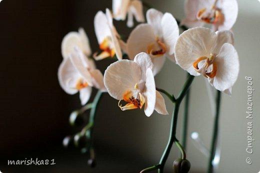 Орхидеи из флористической полимерной глины фото 3