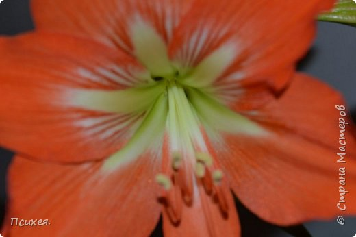 Здравствуйте,Уважаемые Мастера! Запоздалый отчет о Весеннем Женском Дне! Сходила на мастер-класс к своей любимице Юлечке.В преддверии праздника мы решили немного забыть о скрапе и занялись букетами из конфет.Ведь все женщины любят цветы,и почти все-конфеты)Оставшиеся дни до 8 Марта крутила цветочки каждую свободную минуту.На этот раз подарков хватило всем,правда на фото только половина,остальные уже подарены. фото 7