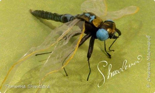 Животные и насекомые из фома фото 22