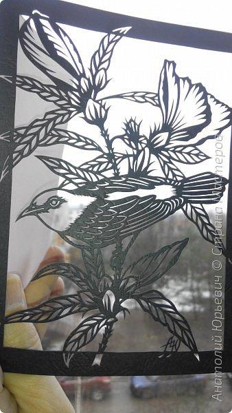 """Всем добрый день! Вашему вниманию новая открытка. К сожалению не нашёл названия этой австралийской птички (если кто подскажет, буду рад). Эскиз выполнен по цветной работе австралийской художницы Deidre Hunt. Изменён и """"доработан"""" под """"вырезалку"""". Размер 12х16см. фото 5"""