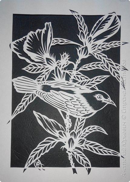"""Всем добрый день! Вашему вниманию новая открытка. К сожалению не нашёл названия этой австралийской птички (если кто подскажет, буду рад). Эскиз выполнен по цветной работе австралийской художницы Deidre Hunt. Изменён и """"доработан"""" под """"вырезалку"""". Размер 12х16см. фото 3"""