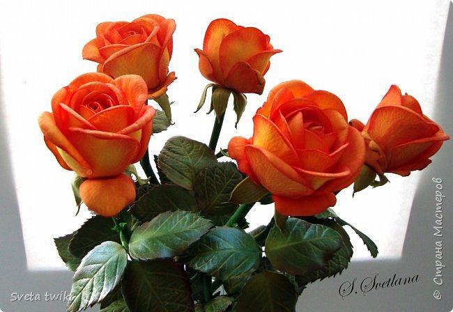 Давно я не была в стране и ничего не выкладывала И вот решила показать вам свой букет роз.Самой очень нравятся розочки.Фотографий будет много и без комментариев.Просто посмотрите.Приятного просмотра. фото 3