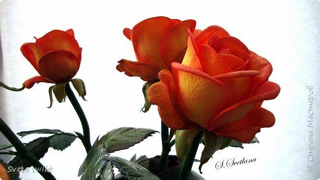 Давно я не была в стране и ничего не выкладывала И вот решила показать вам свой букет роз.Самой очень нравятся розочки.Фотографий будет много и без комментариев.Просто посмотрите.Приятного просмотра. фото 5