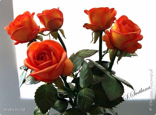 Давно я не была в стране и ничего не выкладывала И вот решила показать вам свой букет роз.Самой очень нравятся розочки.Фотографий будет много и без комментариев.Просто посмотрите.Приятного просмотра. фото 6