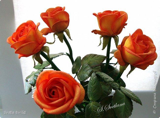 Давно я не была в стране и ничего не выкладывала И вот решила показать вам свой букет роз.Самой очень нравятся розочки.Фотографий будет много и без комментариев.Просто посмотрите.Приятного просмотра. фото 7