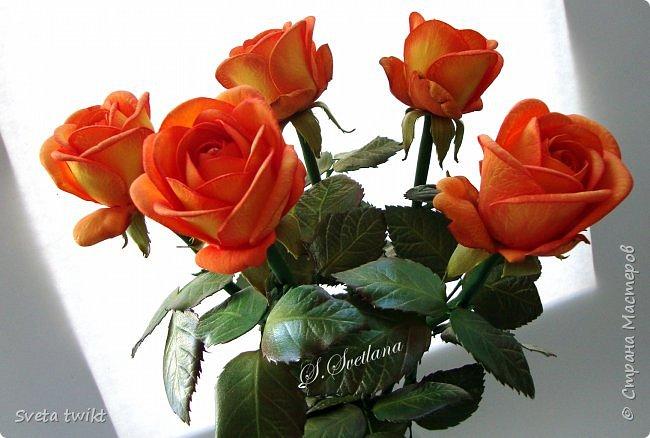 Давно я не была в стране и ничего не выкладывала И вот решила показать вам свой букет роз.Самой очень нравятся розочки.Фотографий будет много и без комментариев.Просто посмотрите.Приятного просмотра. фото 8