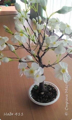Цветущая яблоня фото 8