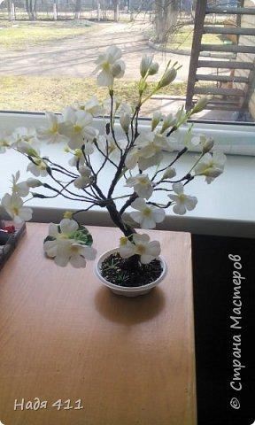 Цветущая яблоня фото 1