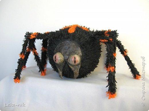 паук фото 5