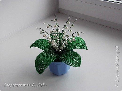 Мои цветочки... фото 4