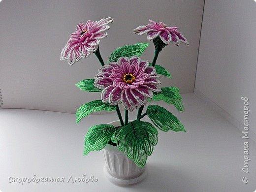 Мои цветочки... фото 1