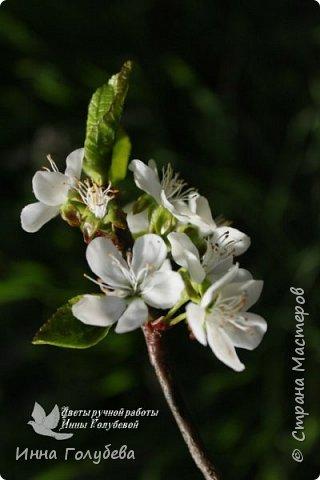 """Разве можно пройти спокойно мимо цветущих деревьев, без желания запечатлеть их цветение) Кто """" в теме"""", тот меня поймет:) Я не смогла. Веточка цветущей вишни из холодного фарфора. Как буду лепить вторую,обязательно отсниму процесс.   фото 2"""