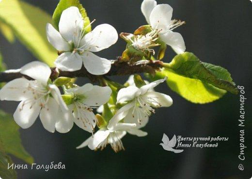 """Разве можно пройти спокойно мимо цветущих деревьев, без желания запечатлеть их цветение) Кто """" в теме"""", тот меня поймет:) Я не смогла. Веточка цветущей вишни из холодного фарфора. Как буду лепить вторую,обязательно отсниму процесс.   фото 11"""
