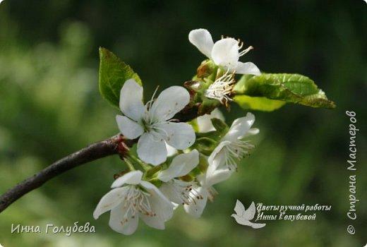 """Разве можно пройти спокойно мимо цветущих деревьев, без желания запечатлеть их цветение) Кто """" в теме"""", тот меня поймет:) Я не смогла. Веточка цветущей вишни из холодного фарфора. Как буду лепить вторую,обязательно отсниму процесс.   фото 9"""