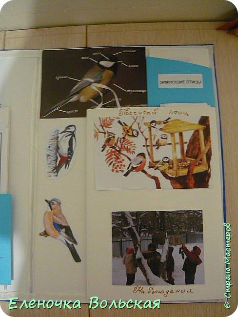 """Лепбук """"Зимующие птицы на нашей кормушке"""" фото 4"""