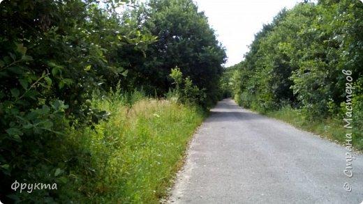 Начало лесной дороги в июле фото 1