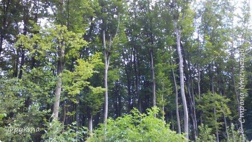 Начало лесной дороги в июле фото 2