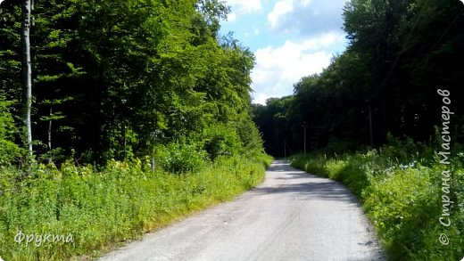 Начало лесной дороги в июле фото 3
