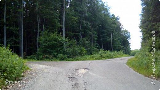 Начало лесной дороги в июле фото 5