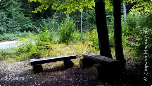 Начало лесной дороги в июле фото 28
