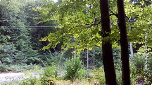 Начало лесной дороги в июле фото 29