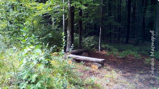 Начало лесной дороги в июле фото 30