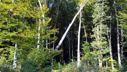 Начало лесной дороги в июле фото 37