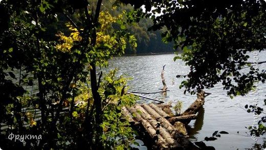 Начало лесной дороги в июле фото 38