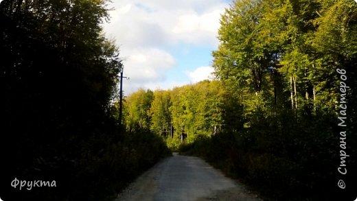 Начало лесной дороги в июле фото 14