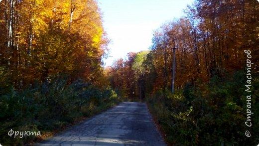 Начало лесной дороги в июле фото 18
