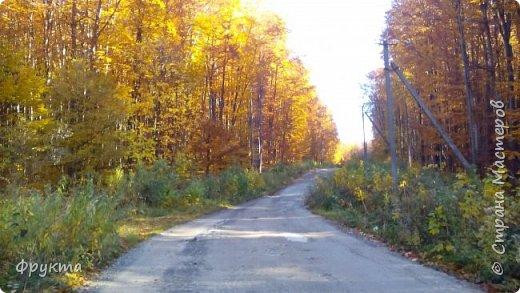 Начало лесной дороги в июле фото 19
