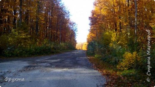 Начало лесной дороги в июле фото 20
