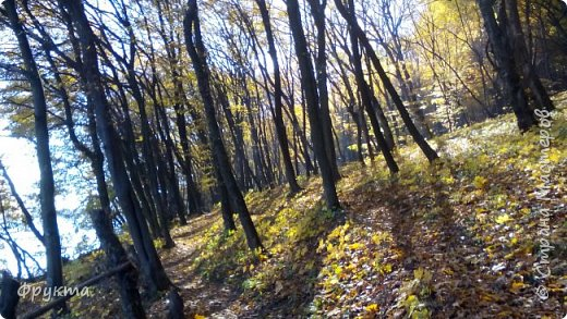 Начало лесной дороги в июле фото 24